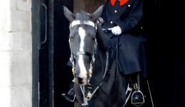 Mounted Guard, London, England