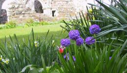 flowers at nunnery ruins, Iona