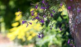 purple flower delight