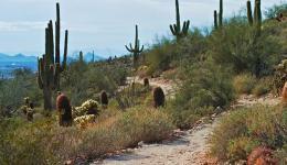 Desert walk, Scottsdale, Arizona