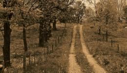 sepia: farm lane - Caledon, Ontario