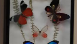 Butterfly Trophies
