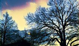 Tree at sundown - Prisma app effect