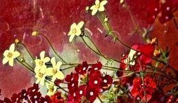 flowers - Prisma