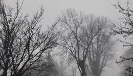 pale sun in mist