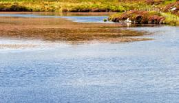 lake and heather, Iona, Scotland