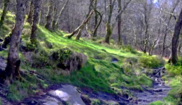 Glendalough woods, Ireland