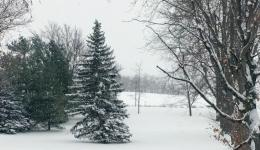 Lawn with trees and snow