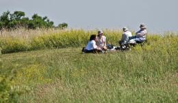 Etobicoke picnic