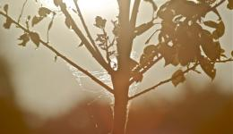 sepia plant light