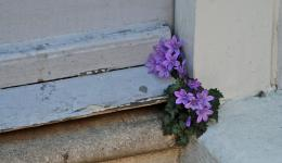 purple flowers on doorstep