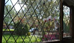 cross-hatch window